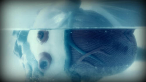Evelyne papillon - Coeur sous-marin